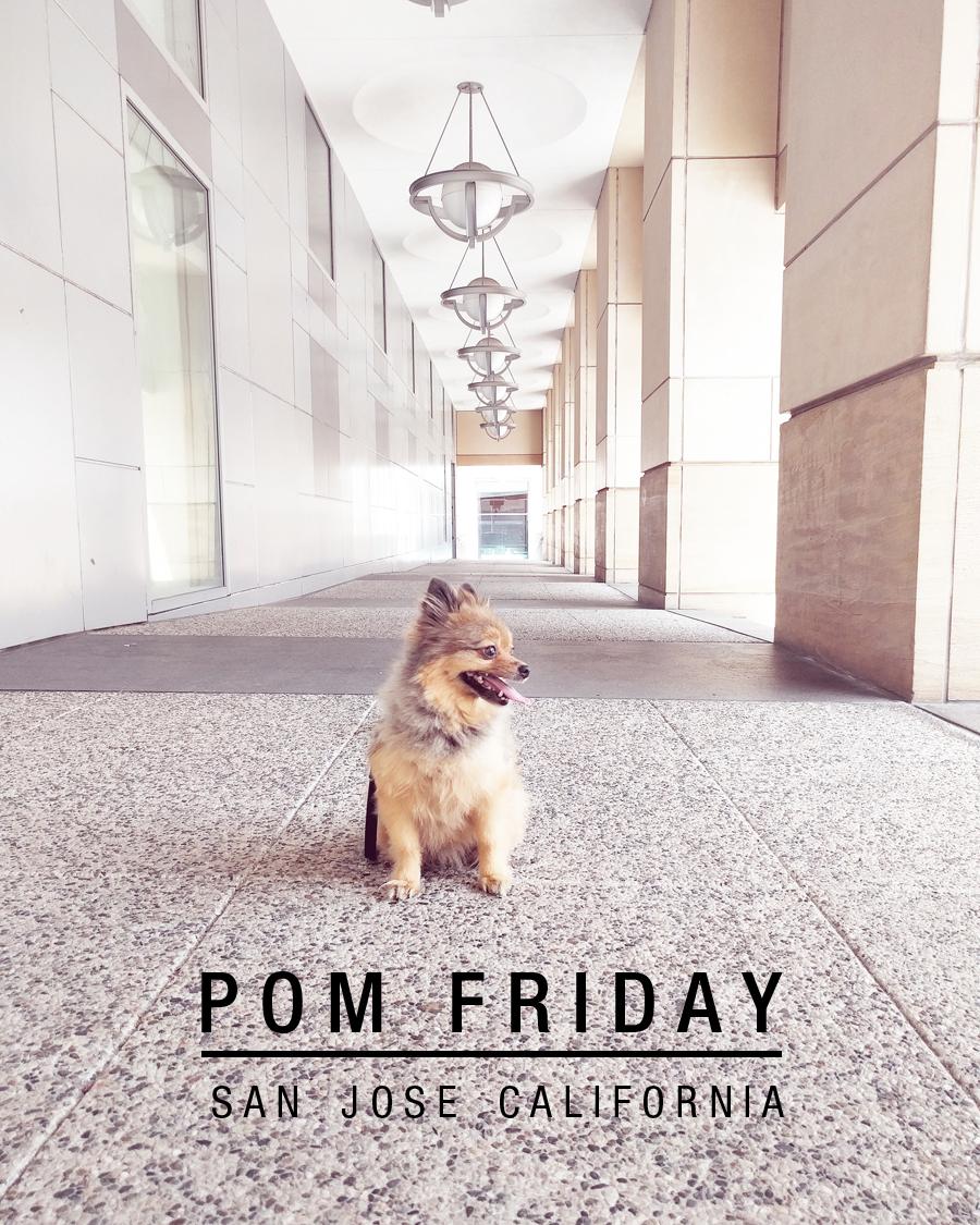 POM-Friday-Header