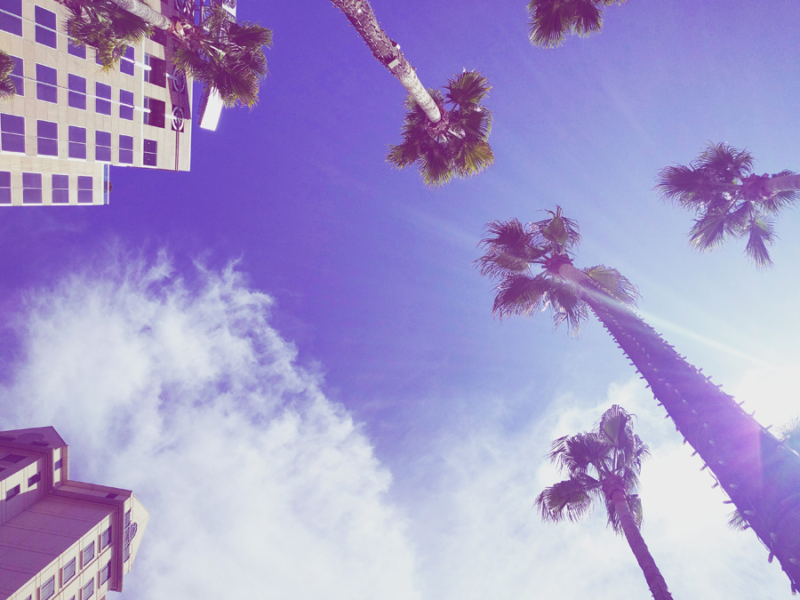 looking-up-at-palm-trees