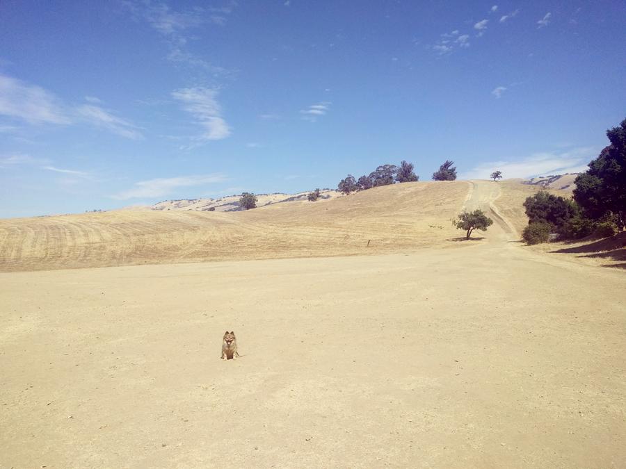 Wide-open-hike