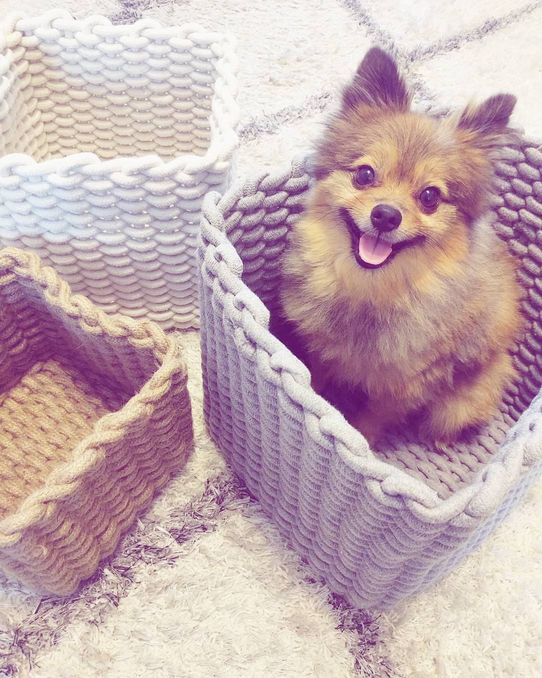 Alfie in Basket