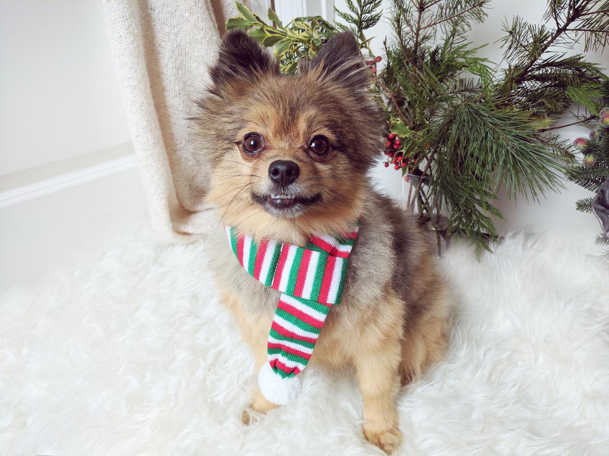 Alfie-in-scarf