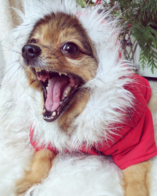 Alfie-yawn