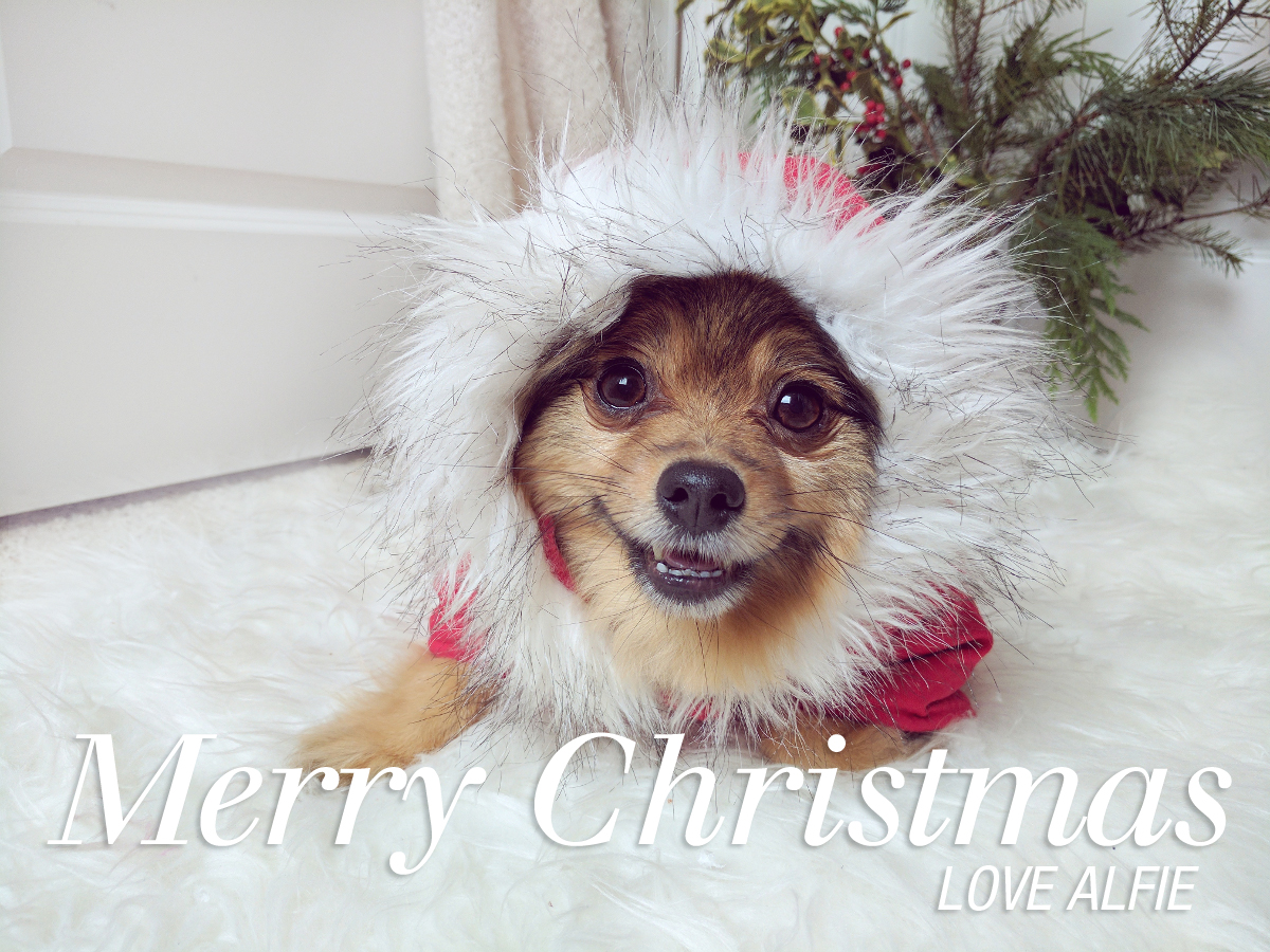 Merry-Christmas-Love-Alfie